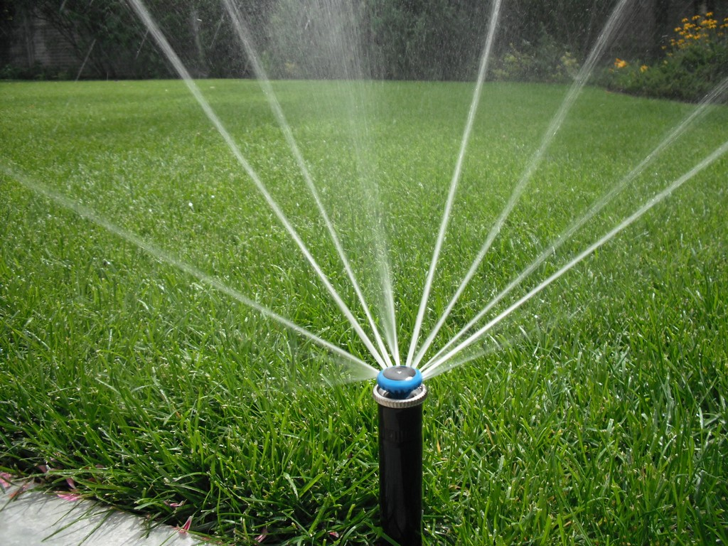 Richtige Wassermenge